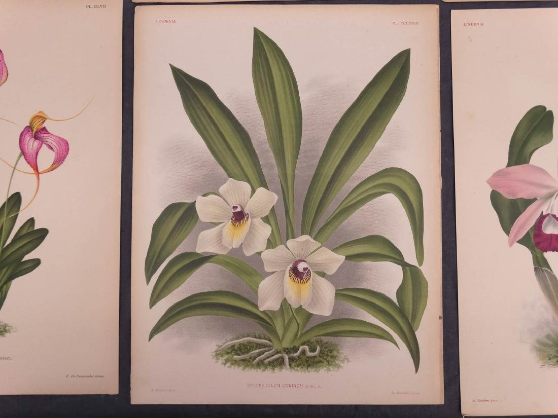 Orchid Botanical Antique Prints (8) - 3