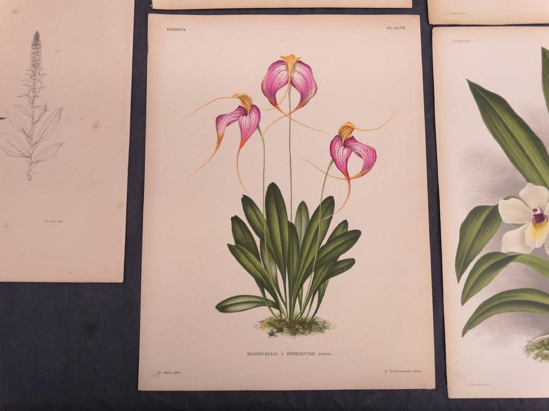 Orchid Botanical Antique Prints (8) - 4