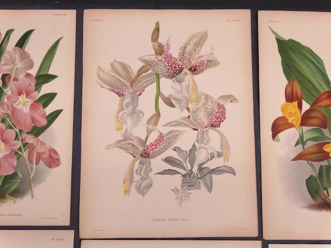 Orchid Botanical Antique Prints (8) - 6