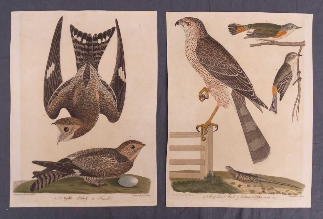 Alexander Wilson Bird Prints (2)
