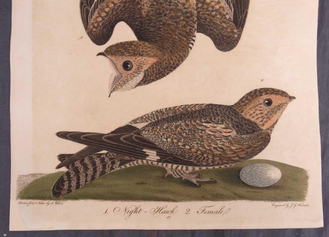 Alexander Wilson Bird Prints (2) - 2
