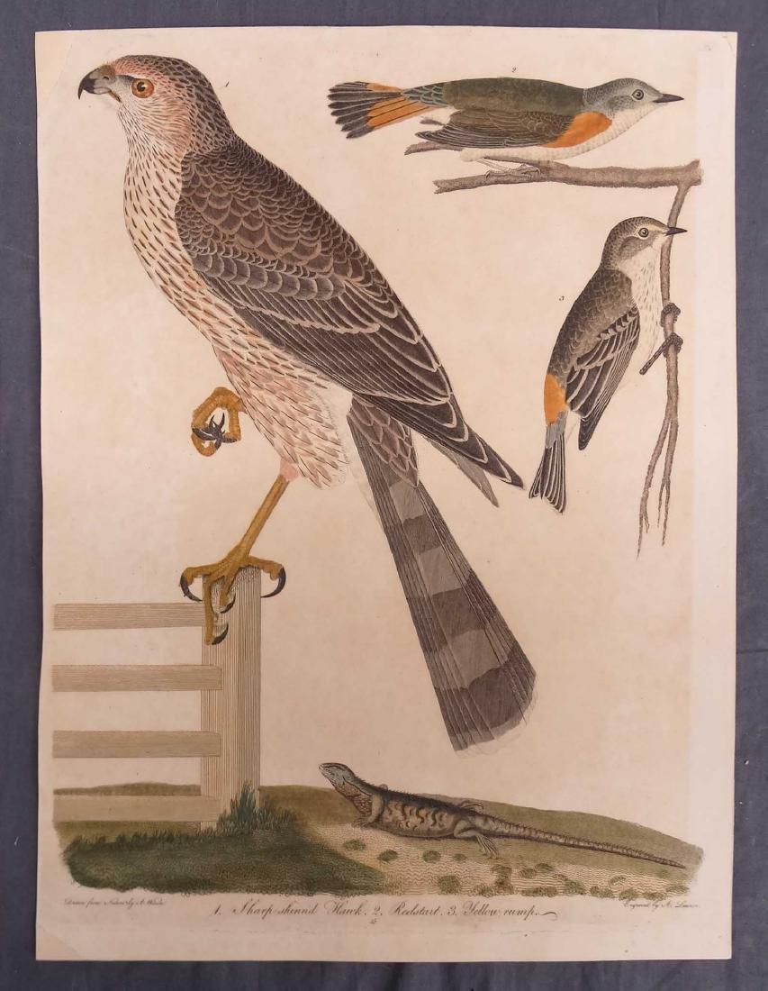 Alexander Wilson Bird Prints (2) - 3
