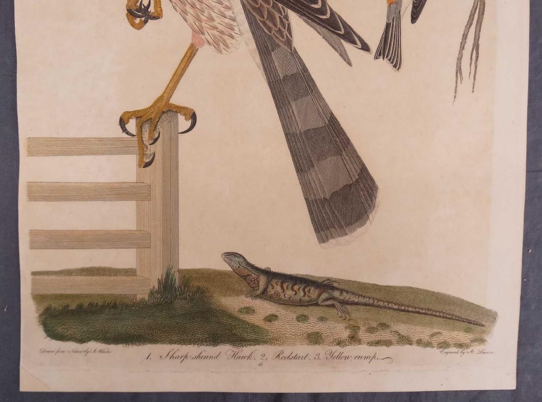 Alexander Wilson Bird Prints (2) - 4