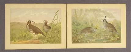 Pope Hunting Birds Prints 2