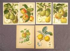 Botanical Fruit Prints Group (6)