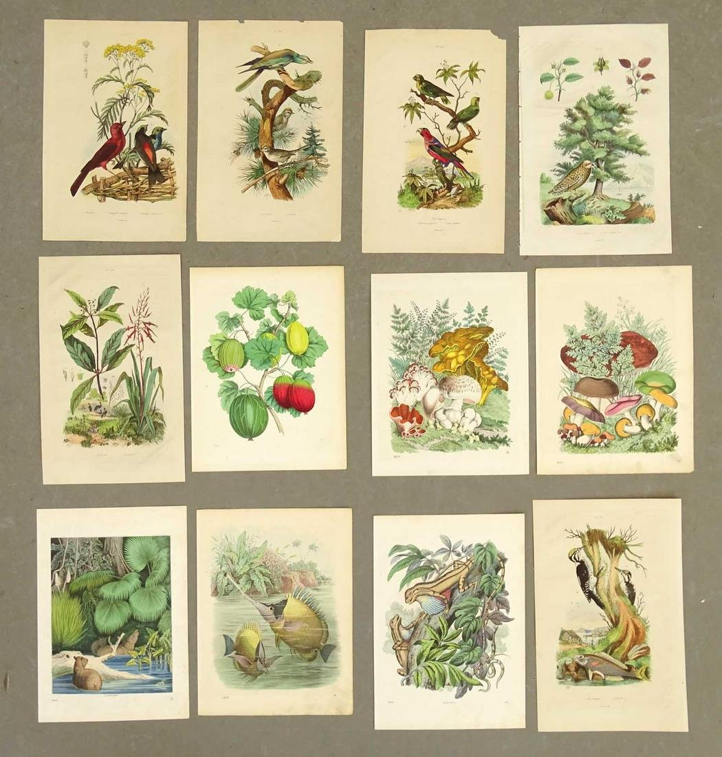 Bird and Botanical Antique Prints (12)