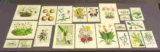 Botanical and Fish Antique Prints (21)