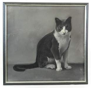 Pastel Drawing of a Cat
