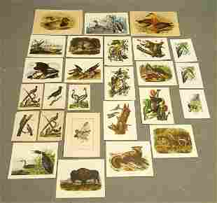 Collection of Bird Prints
