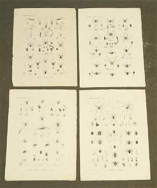 Napoleon Egypt Expedition Spiders Prints (4)