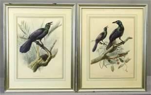 Elliot Antique Bird of Paradise Print Pair
