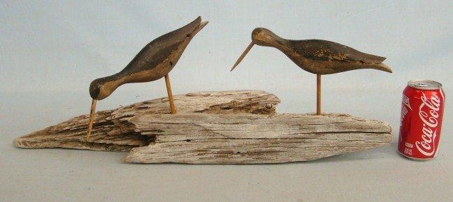 152: Shorebirds