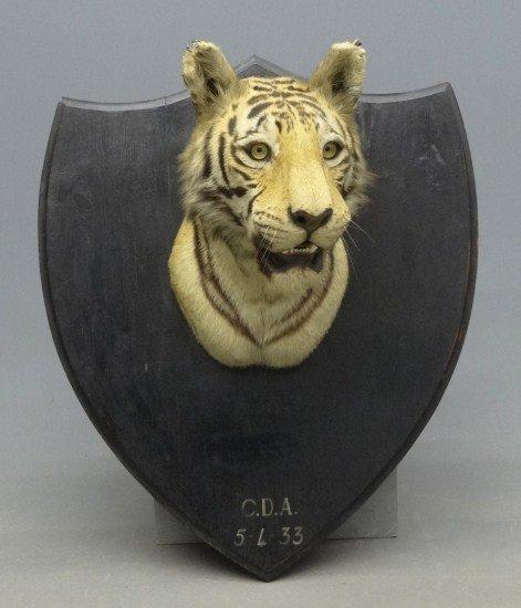 301: Tiger Mount