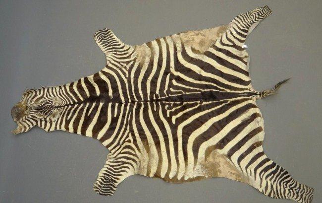 576: Zebra Rug