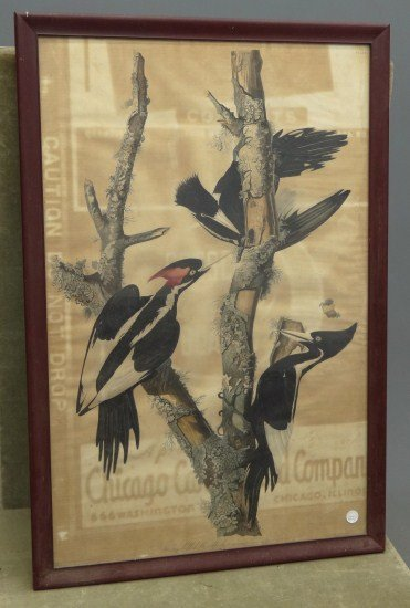 "602: John J. Audubon Print, ""Ivory billed Woodpecker"""
