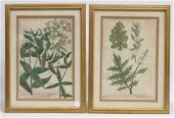 Pair Early Botanical Hand Colored Prints