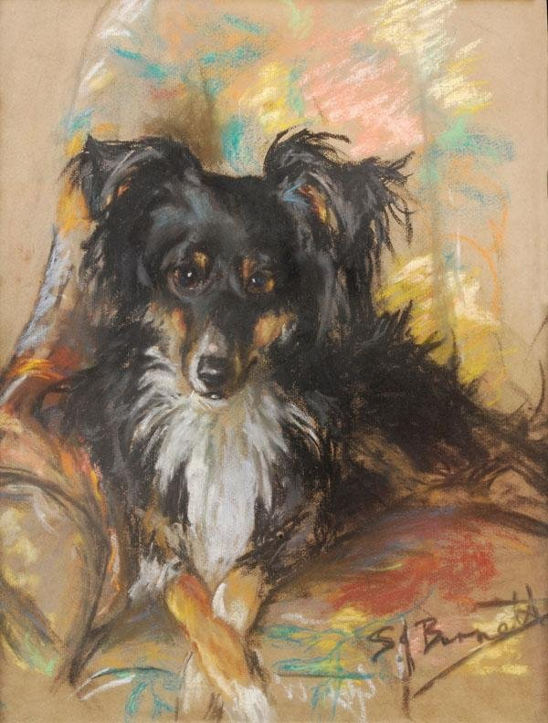 474: S** J** Burnett. Study of a Collie. Pastel. Signed
