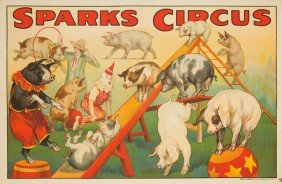 Sparks Circus / Pigs. Ca. 1925