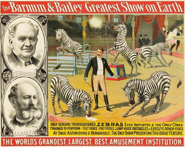 8: Barnum & Bailey / Zebras. ca. 1892