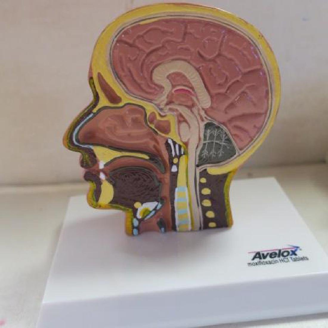 Drug Company Advertising Display Toys; Ear & Head: - 2