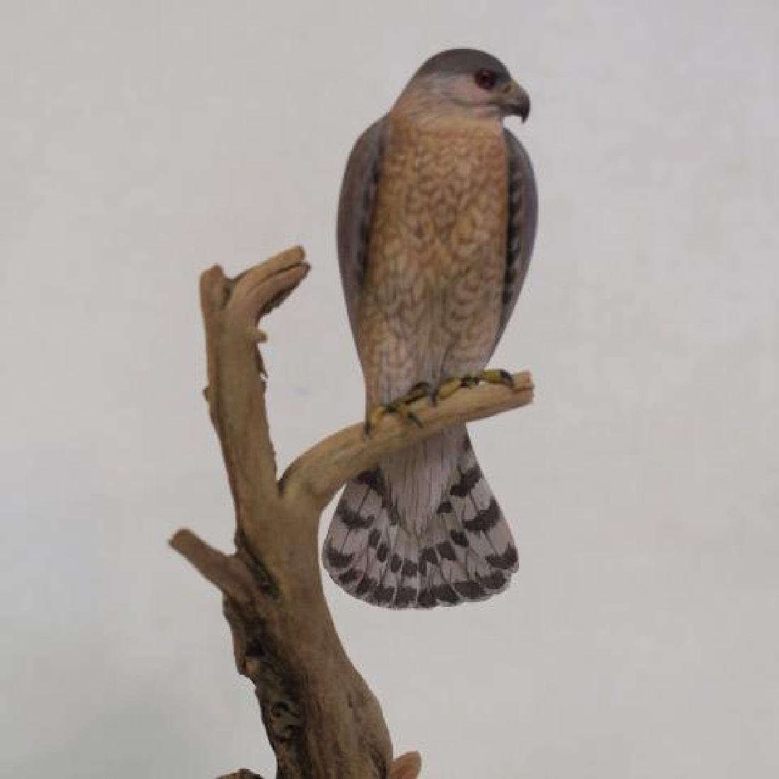 """Minutely Hand Carved """"Coopers Hawk"""" by Billy Crockett - 2"""