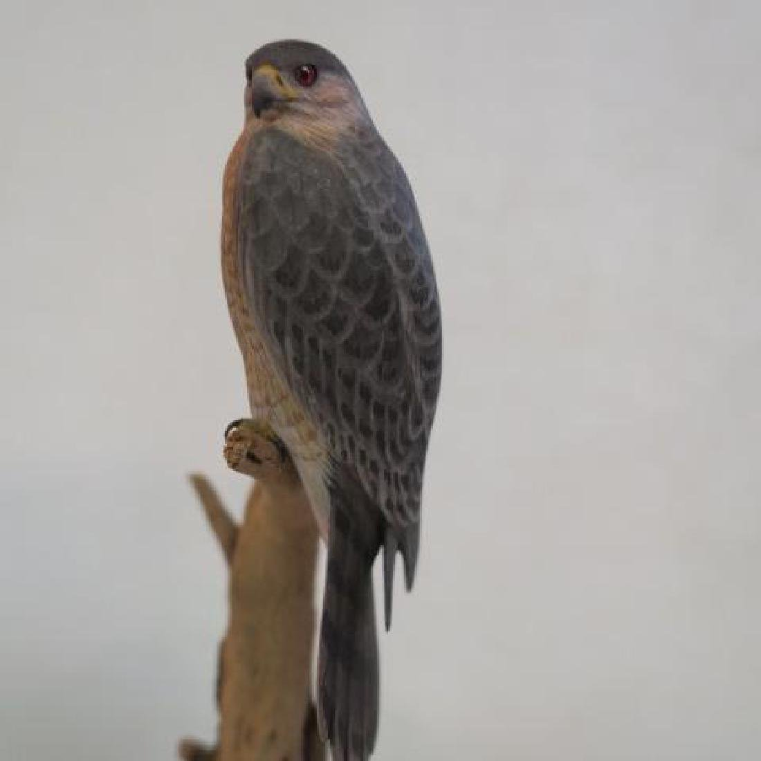 """Minutely Hand Carved """"Coopers Hawk"""" by Billy Crockett - 4"""