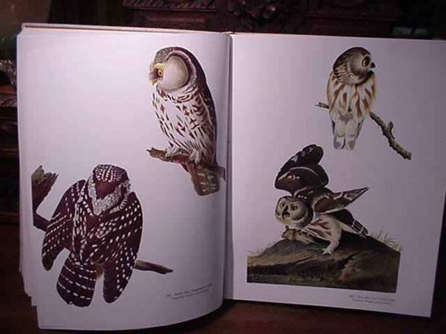 1: Audubon's Birds of America, Peterson, 1981