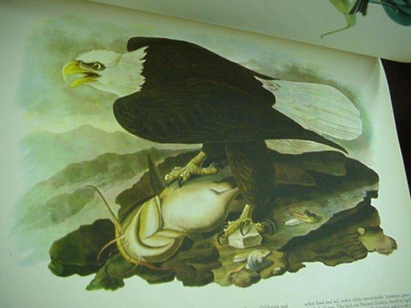 1262: John James Audubon 1937 Birds of America Book: - 2