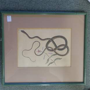 After Mark Catesby Coach Whip Snake Engraving: