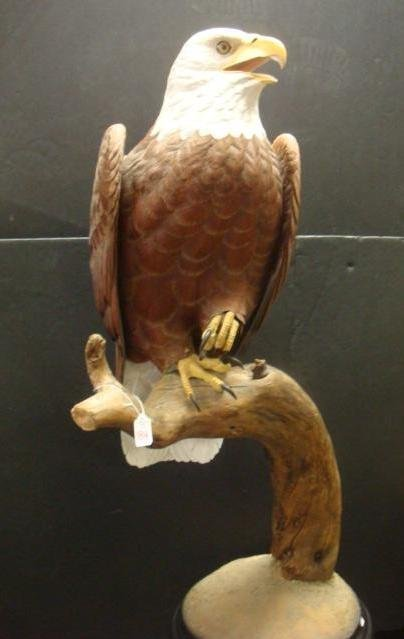 184: LYNN FOREHAND Carved Life-size Bald Eagle: