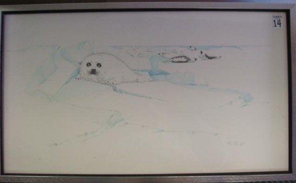 14: Pencil Signed Limited Edition Baby Seal Print: