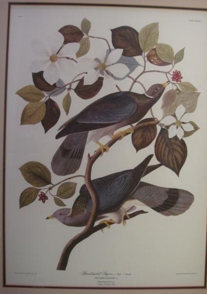 22: Two R HAVELL Audubon Bird Prints:
