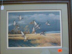 Singed MAYNARD REECE Mallard Duck Print: