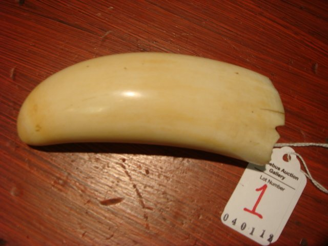 1: Vintage Ivory Sperm Whale Tooth: