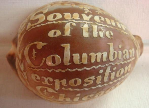Tiger Cowrie Shell Souvenir of Columbian Exposition:
