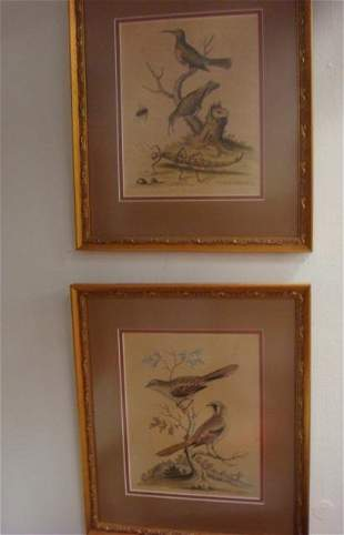 Two GEORGE EDWARDS signed Hand Colored Bird Prints: