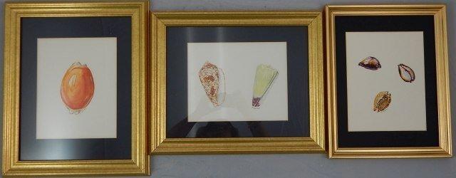 """(424) Gilbert Conan """"Shell Study"""""""