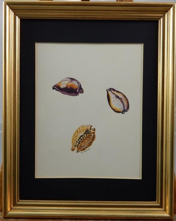 """(424) Gilbert Conan """"Shell Study"""" - 4"""