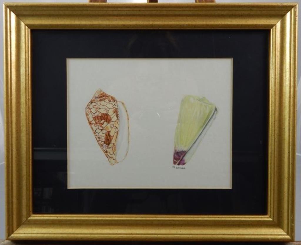 """(424) Gilbert Conan """"Shell Study"""" - 6"""
