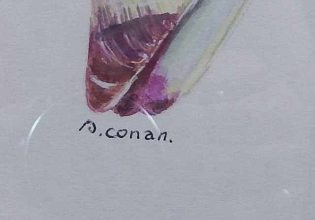 """(424) Gilbert Conan """"Shell Study"""" - 7"""