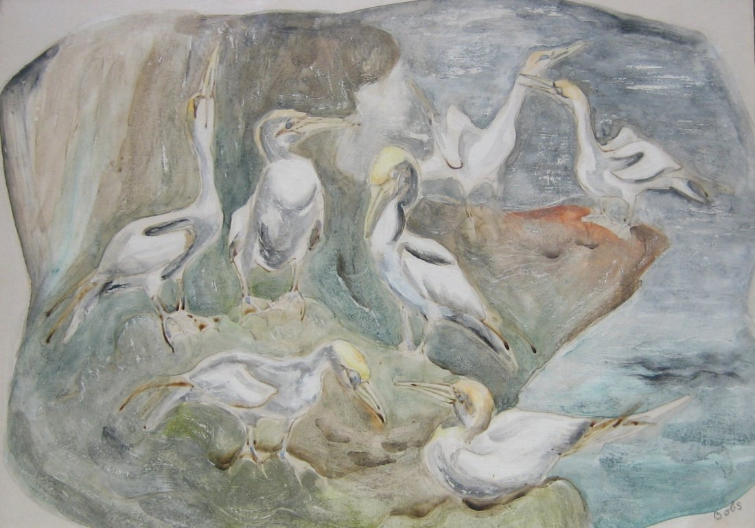 24: Gannets