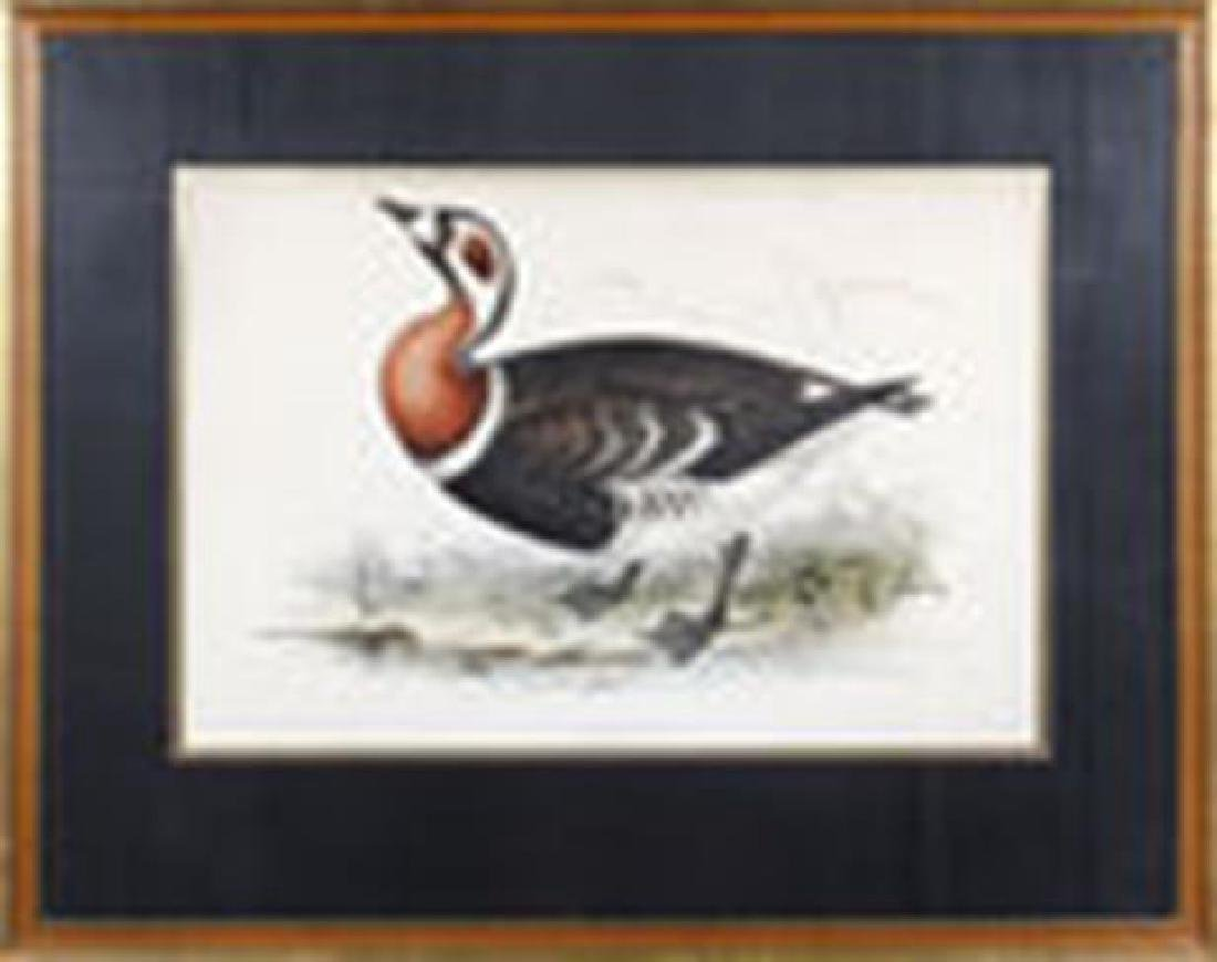 After Edward Lear Red Breasted Goose Litho