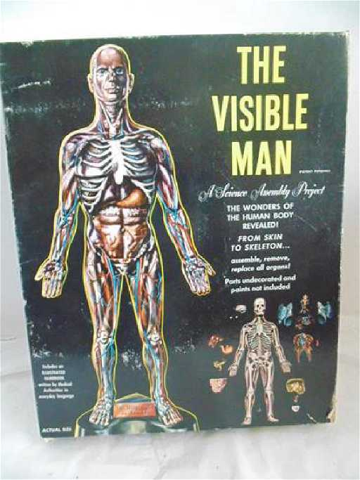 Vintage Visible Man Model Kit By Renwall