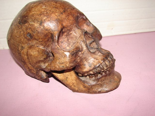 Skeleton Head Sculpture