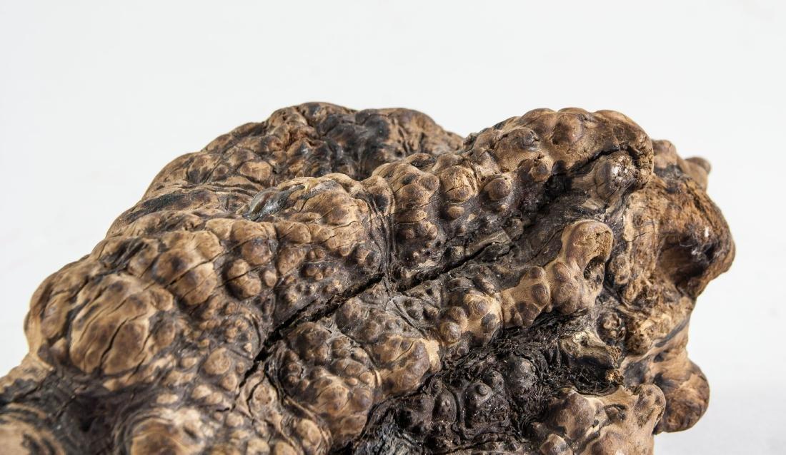 Chinese Fossilized Agarwood Scholar's Stone - 6