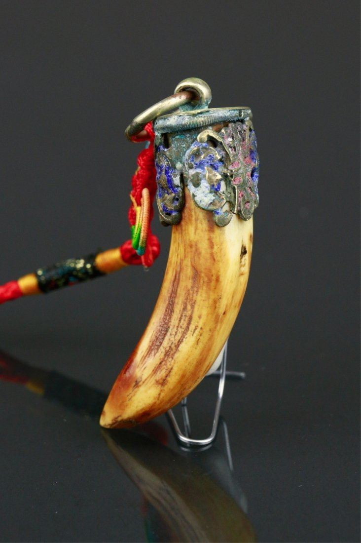 Chinese Tiger Tooth Pendant - 3
