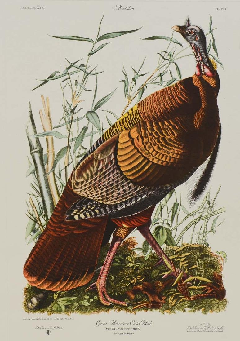 Audubon Wild Turkey ACP Edition