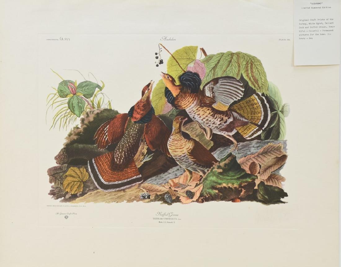 Audubon Ruffled Grouse ACP Edition