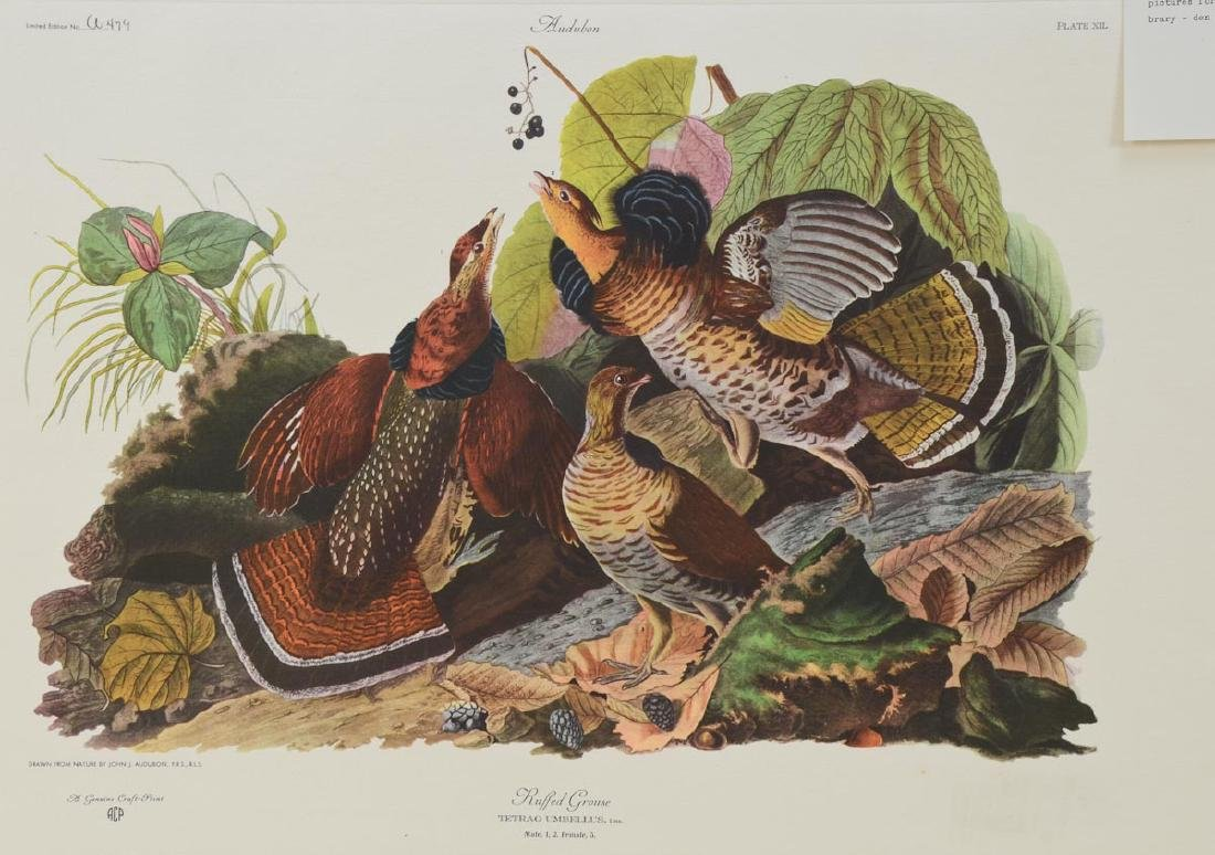 Audubon Ruffled Grouse ACP Edition - 2