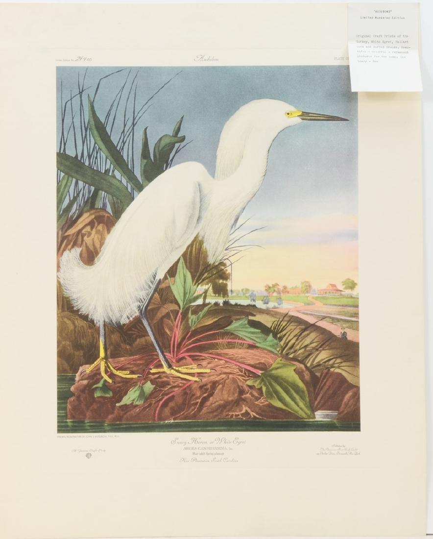 Audubon Snowy Heron ACP Edition